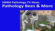 SWBH Path TV News